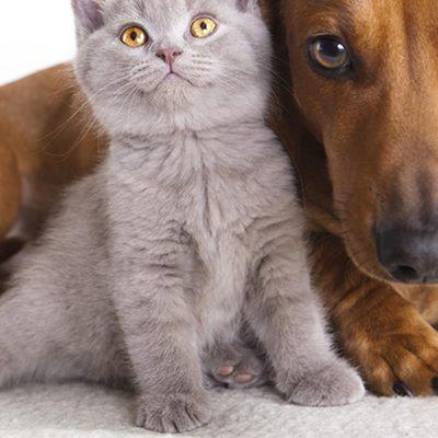 https://www.google.it/amp/s/www.money.it/Vendita-cani-gatti-razza-senza-pedigree-illegale-sanzioni%3fpage=amp