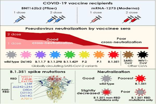 È possibile, secondo scienza, stabilire se e quali varianti del virus siano state provocate dalla vaccinazione? Sì lo è – Seminare Domande